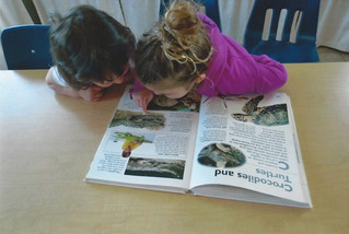 Reading about crocodiles and turtles.