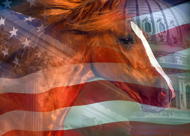 fund_horse_flag_and_dome.png