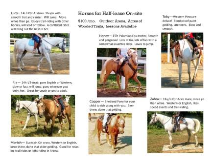 Horses for Lease-Web