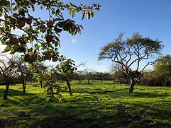 Orchard - 1.jpg