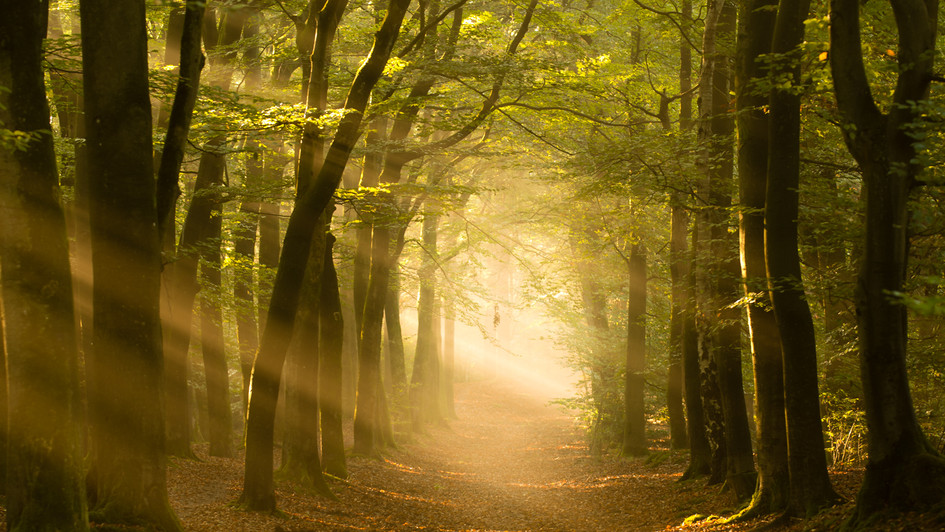 Forest dream..