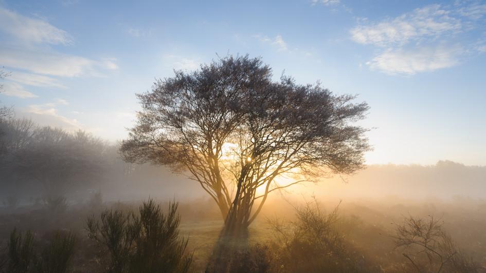 heathland..