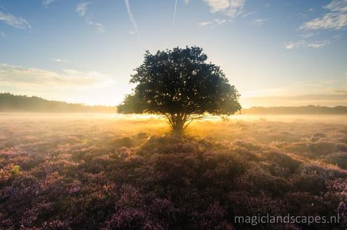 magic Heath