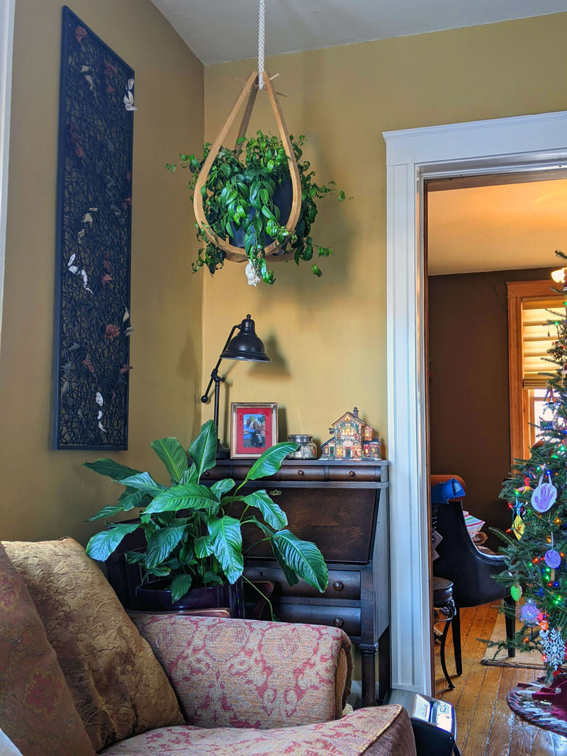 Green plants draw the eye up and add character to a living room.