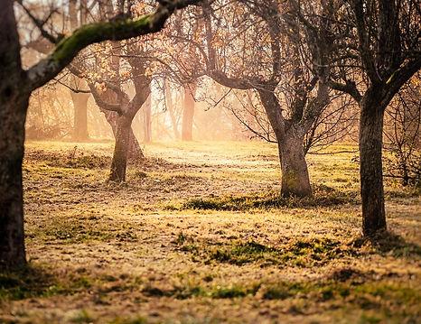 orchard-2938653_1280.jpg