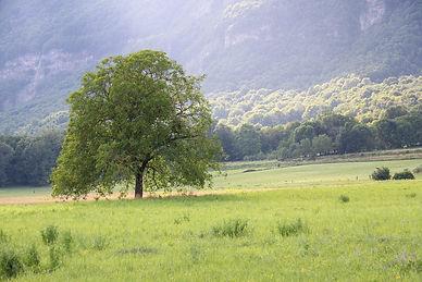tree-4316907_1280.jpg
