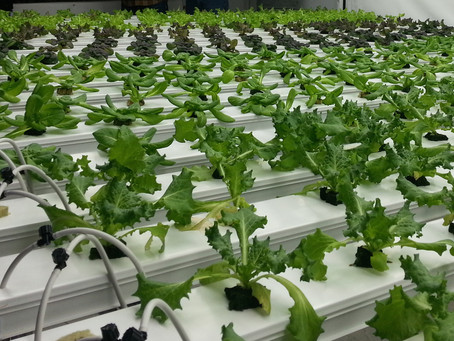 ONLINE Hydroponic Garden 101 Class - $40/person, 2-hour, hands-on w/ supplies
