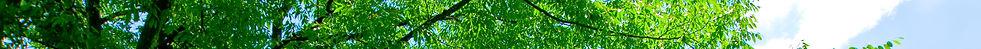 pixta_2504891_L_edited.jpg
