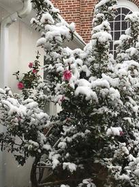 Snowy Garden Pic