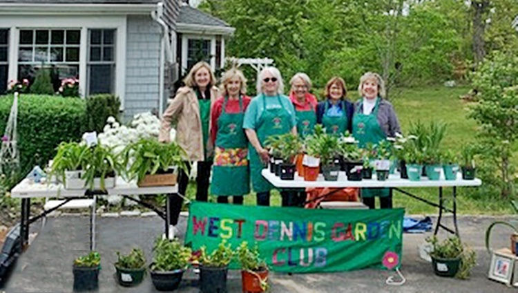 Plant Sale at Peggys (7).jpg
