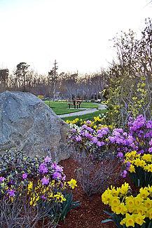 more flowers Nob. Park