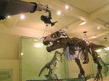 Jib shoot at American Museum of Natural History T-Rex