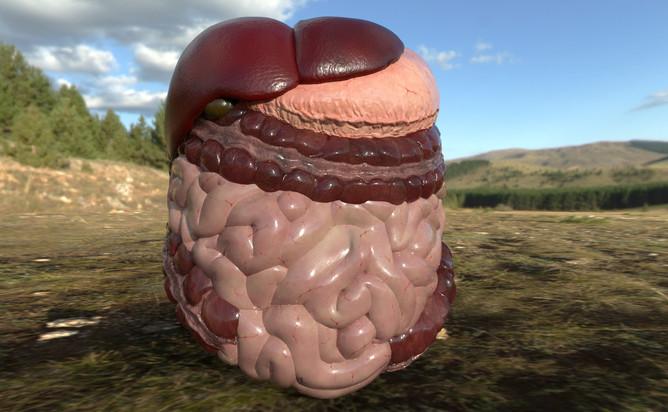 organs 01.jpg