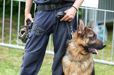Guard dog patrol