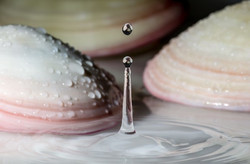Beauty by Nichola Marie - Shells