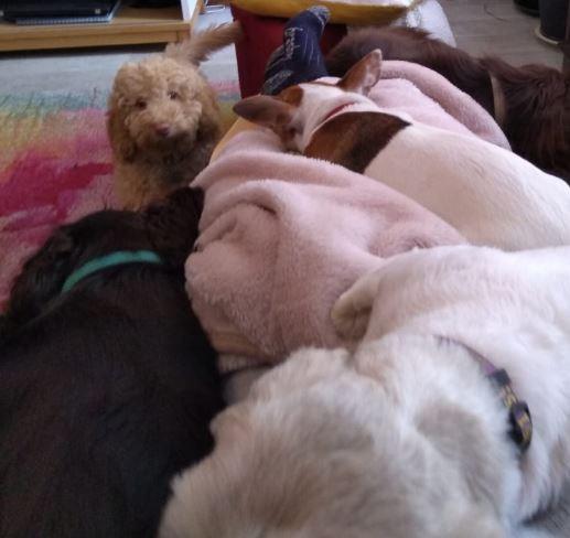 so many dogs, so little knee.JPG