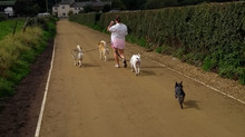 Out in the countryside with Pepper, Rocky, Rokka and Suki