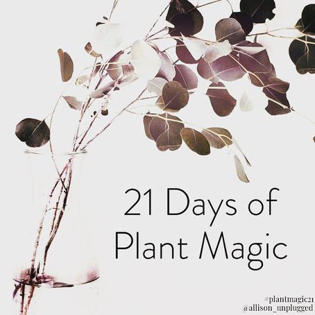 21 Days of Plant Magic