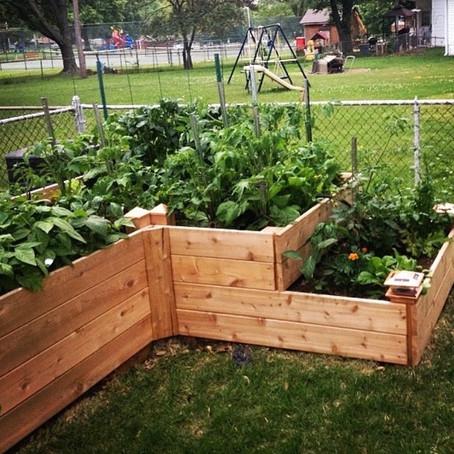 The Garden Box Club