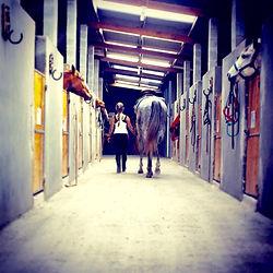 Pensao para cavalos Vila Hipica WS