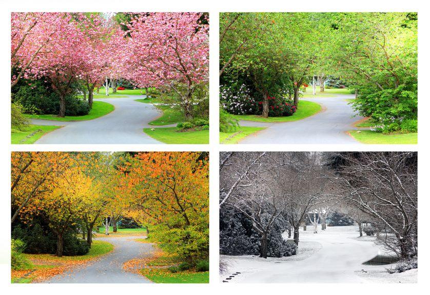 neighborhood-changing-seasons.jpg.838x0_