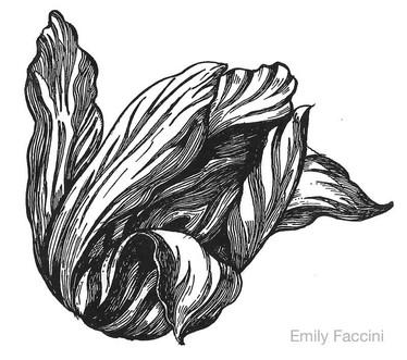 For Tulip Landscapes