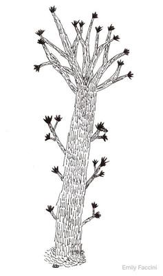 Tree - Francesco Faccini