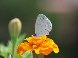 Vlinders proeven hoe?