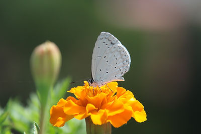 Butterfly on a flower for caregiver support group, Bedford, Texas