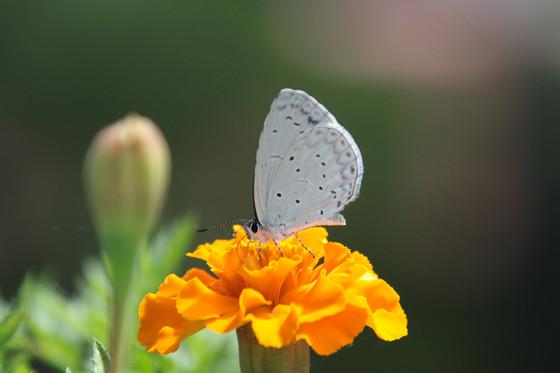 The Symbiotic Evolution of Flowers & Pollinators