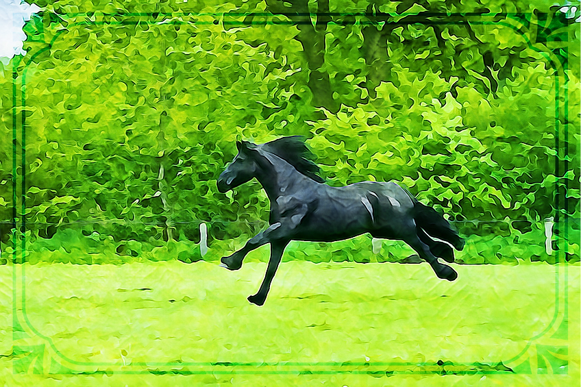 HorseWeb.png
