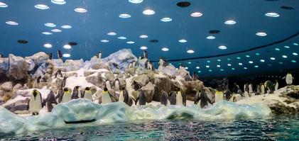 Pingwinarium w Loro.jpg