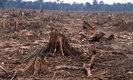 deforestation-causes-HI_104236.jpg