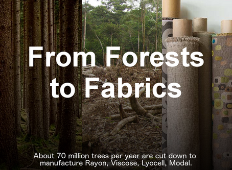From Forests to Fabrics: The fashion industry's global impact on Ancient and Endangered Forests
