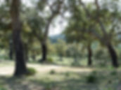 Alcornocales natural park - cork oak woodland