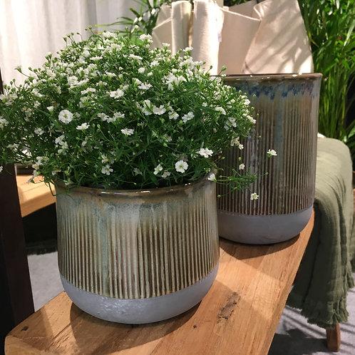 'Bransa' flower pot