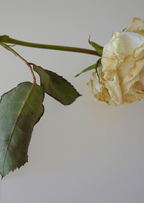 White with Two Leaves