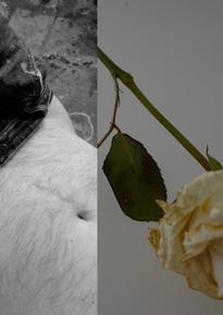 Torso and White