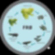 Frøens livscyklus 100x100