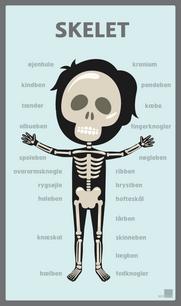 Kropsmotiv Skelet - 65x110.png