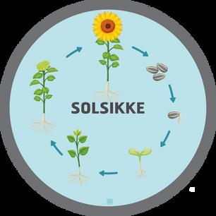 Solsikke Ø100