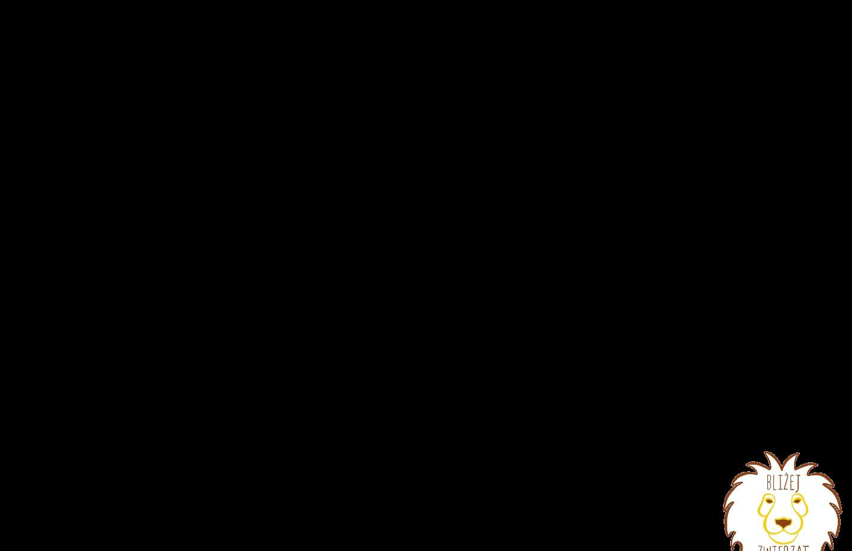 lori-bengalski.mp4