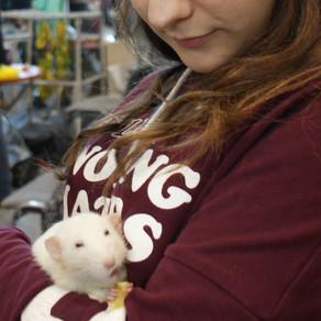 Rola stada w szczurzym życiu