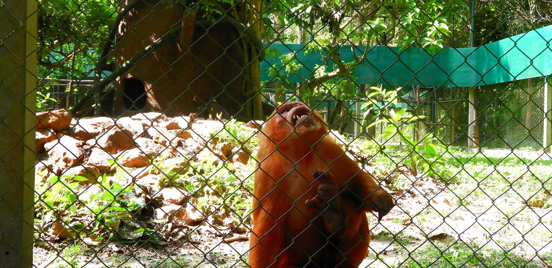małpa-klatka.JPG