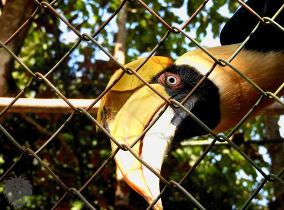 dzioborożec-ptak.JPG