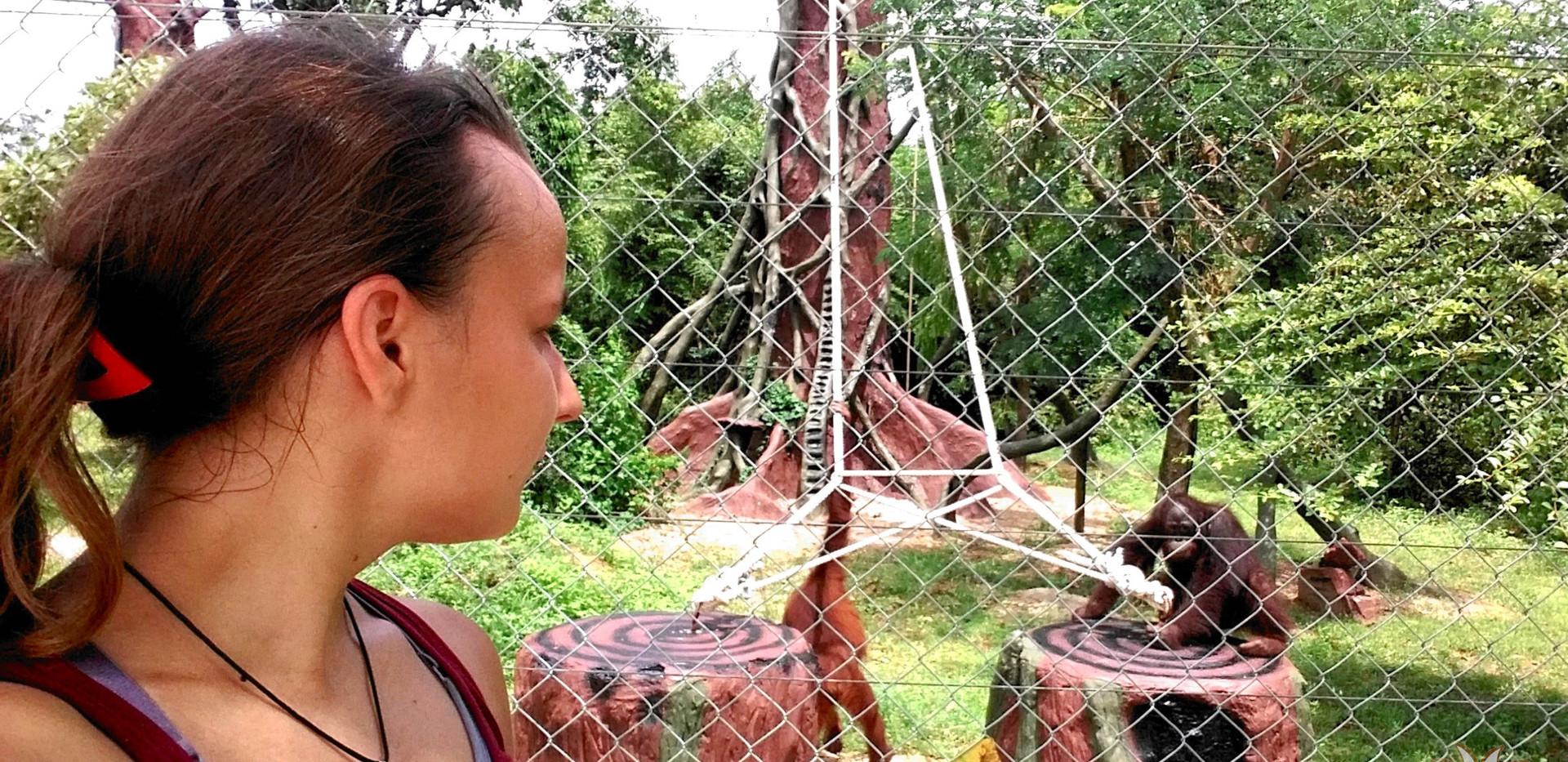 orangutany-wybieg.jpg