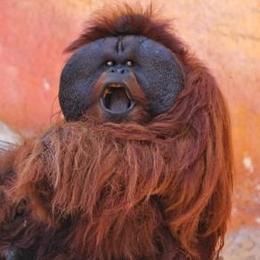 Złe małpy