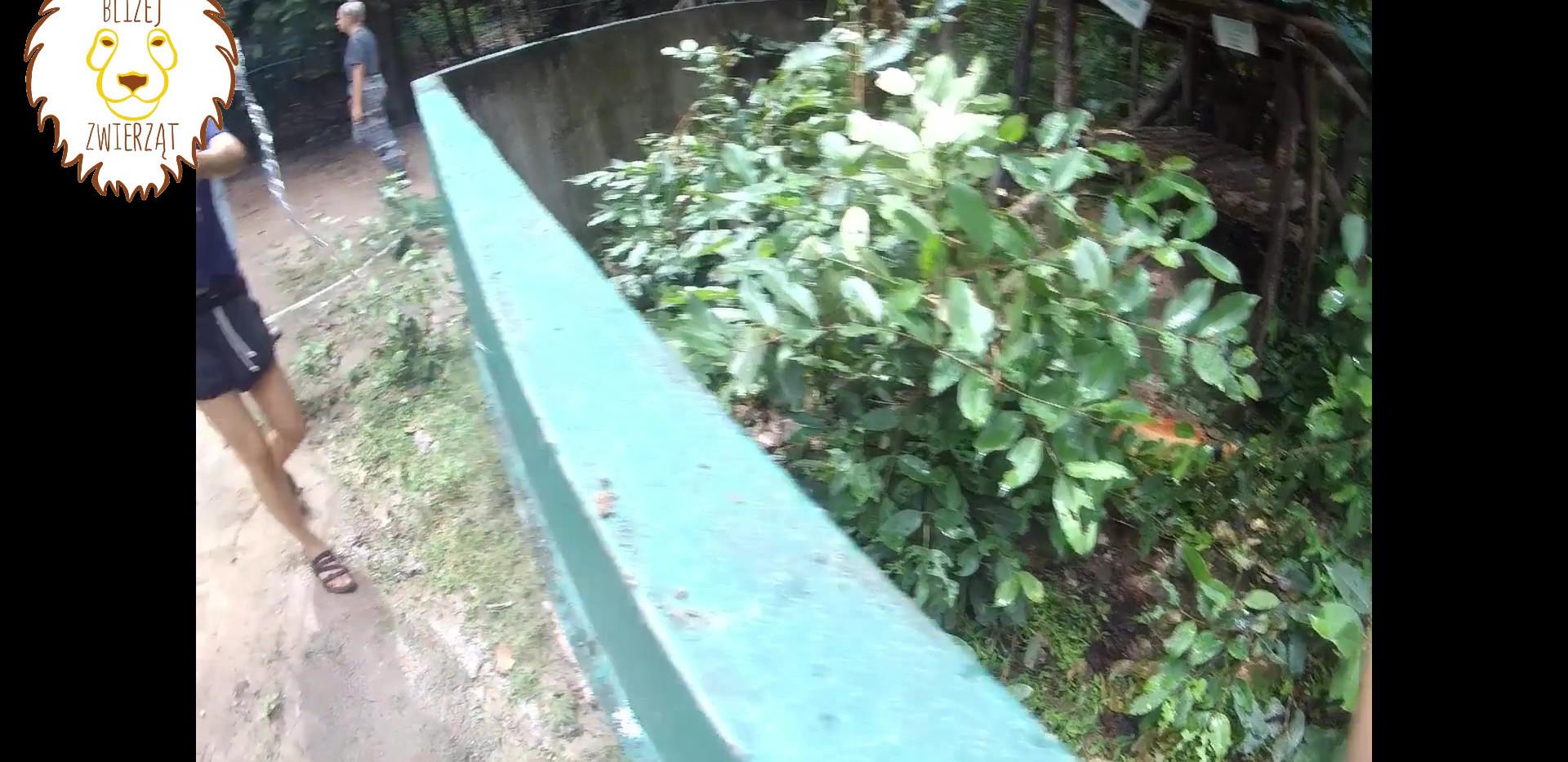iguana film.mp4