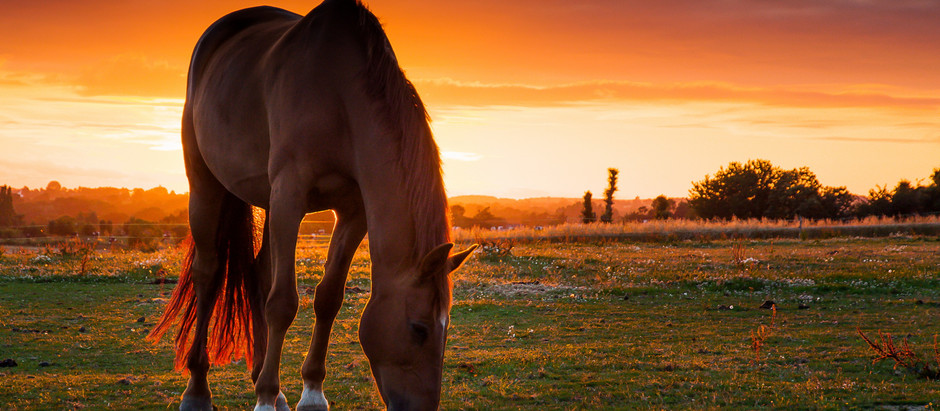 The Therapeutic Value of Horses