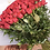 Thumbnail: Rose rosse- Red roses